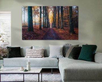Herfstpracht van Joris Pannemans - Loris Photography