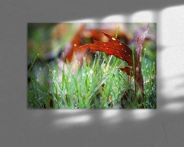 Blaadje in het natte gras van Ilse Rood