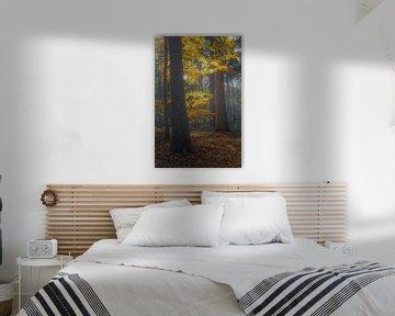Gouden streling van Joris Pannemans - Loris Photography