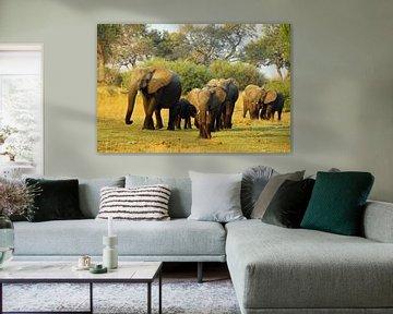 Olifanten familie van Marieke Funke