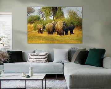 Olifanten familie in Botswana van Marieke Funke