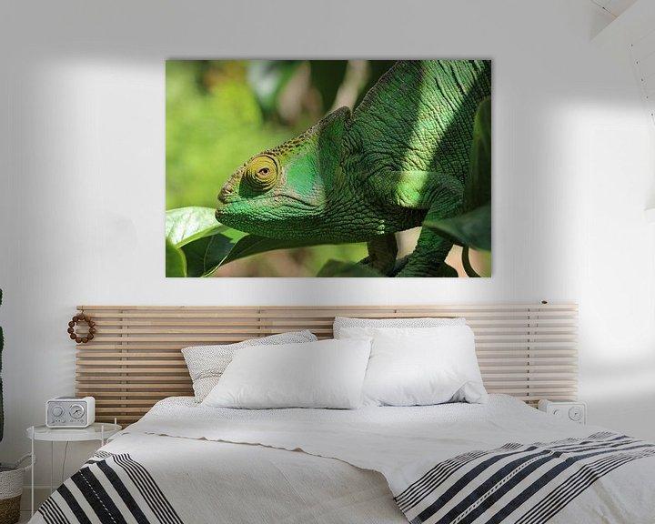 Beispiel: Chameleon on Madagascar von Marieke Funke