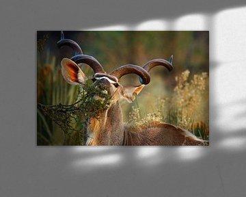 Kudu in Botswana van Marieke Funke