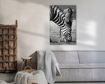 zwart wit zebra met jong in Botswana von Marieke Funke