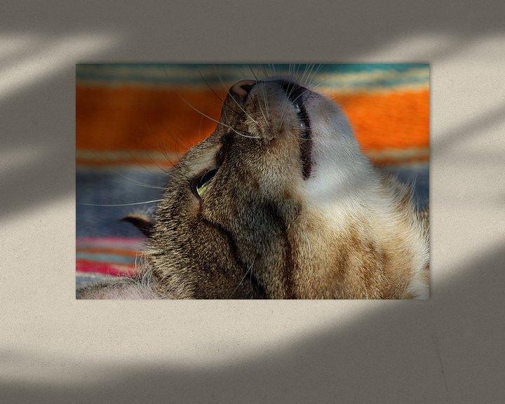 Sfeerimpressie: cyperse kat van Marieke Funke