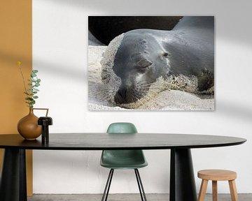 Seelöwe auf Galapagos Strand von Marieke Funke