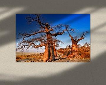 Old trees of Botswana, Kubu Island van W. Woyke
