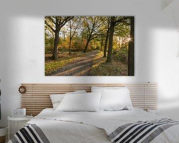 Herfst in het Stropersbos, Stekene, België.