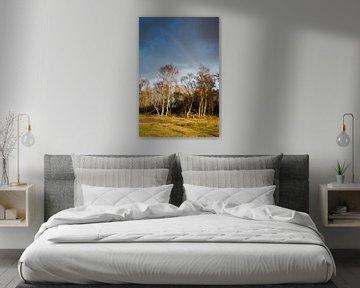 Regenboog boven winterse bomen van Marcel Alsemgeest