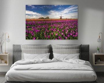 Tulpenveld met molen van Dick van Duijn