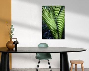 Palmblad na regenbui in Australië van Kees van Dun
