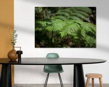 Farn im Kuranda-Regenwald, Australien. von Kees van Dun