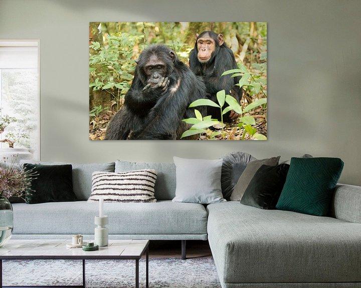 Sfeerimpressie: Schimpansen - Chimpanzee van Britta Kärcher