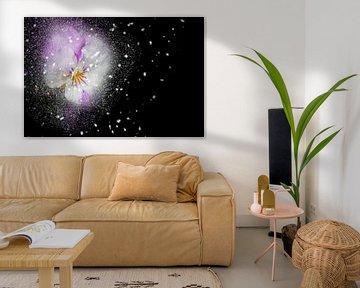 Magic Flower with black backround van Ursula Di Chito