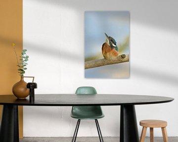Kingfisher * Alcedo atthis * van wunderbare Erde