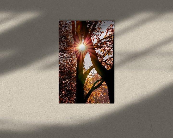 Sfeerimpressie: De zon als ster tussen de bomen van Fotografie Jeronimo