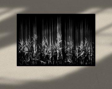 Umzug von Mais von Jacqueline Lemmens