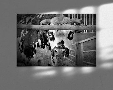 Bull's Eye van Sandra van der Burg