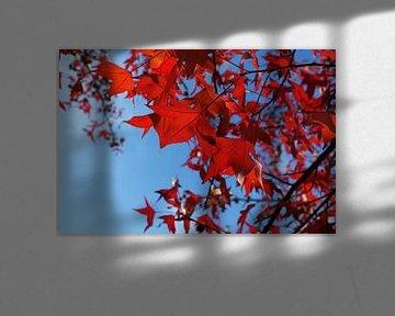 close up van rode herfstbladeren aan een boom