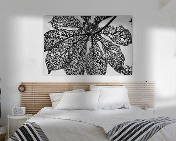 zwart wit van groot blad von Marieke Funke