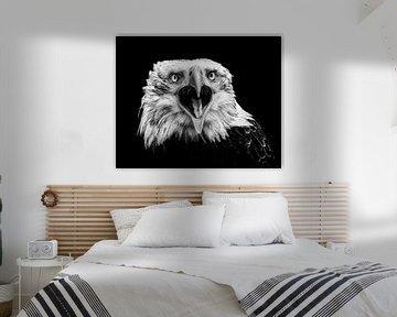 Amerikanischer Adlerabschluß oben - schwarzes Weiß von Vincent Willems
