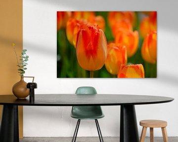 Tulp oranje van Ineke Nientied