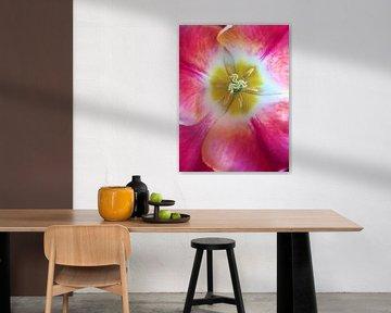 Das Herz der Tulpe von Sandra van der Burg