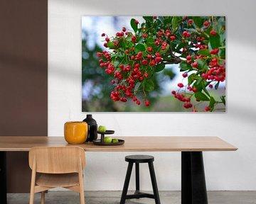 Red Berries van Lynda Cookson