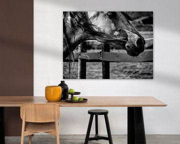 Horse black and white von Michelle De Jong