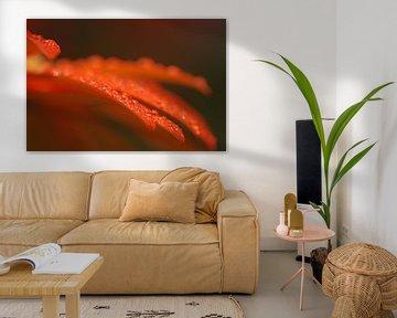 Gerbera macrofotografie bloemen