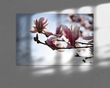 Rosa Frühlingsblüte mit sonnigem Fokus der blühenden Magnolienblume von Dorus Marchal