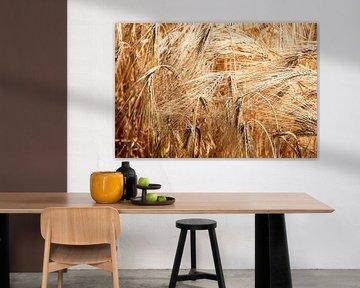 Récolte dans le magnifique paysage limbourgeois d'herbe de blé et de blé de printemps sur Dorus Marchal