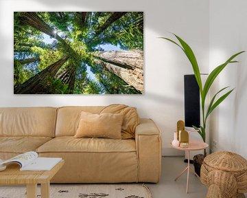 Bomen in de Redwoods, Redwood National and state park van Corinne Cornelissen-Megens