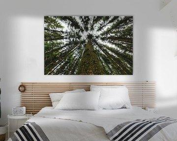 Landschap in de verte | Bomen en bos van Steven Dijkshoorn