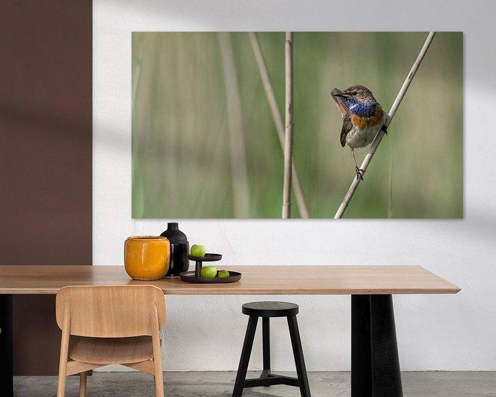 Sfeerimpressie: Blauwborst in het riet van Jan Jongejan