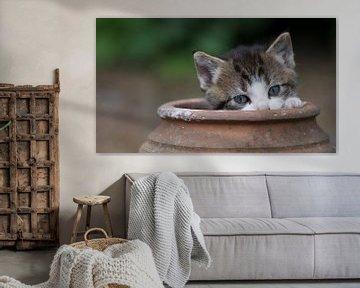 Kitten in aardewerken pot
