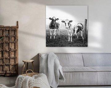 Koeien in de mist 4 van Jacqueline Koster