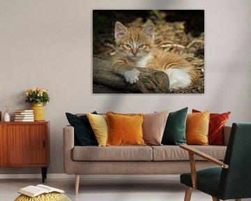 Kitten von Jan Jongejan