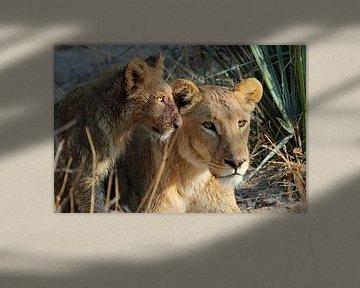 Moeder leeuw met jong in Mma Dinare van Marieke Funke