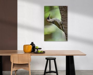 Green Woodpecker ( Picus viridis ), climbing up a tree trunk van wunderbare Erde