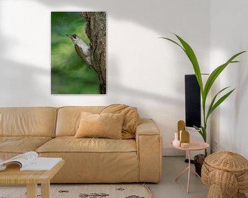 Green Woodpecker ( Picus viridis ), perched on a tree trunk, turning back its head van wunderbare Erde