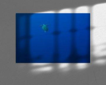 Turtle Heaven von Luc Buthker