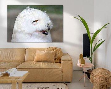 Jolige witte sneeuwuil von Dennis van de Water