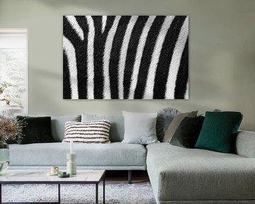 Zebrastrepen close up von Dennis van de Water