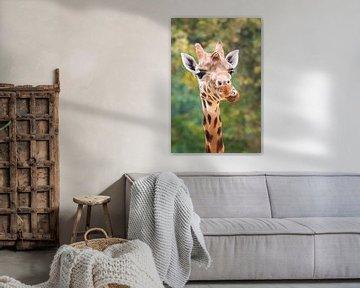 Grappig portret van een Giraffe von Dennis van de Water