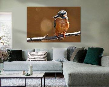 IJsvogel op tak, oranje achtergrond met bokeh