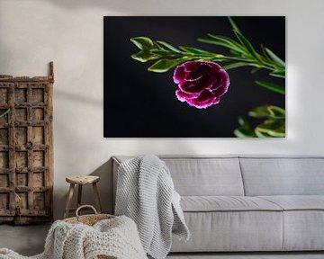 Roze bloem in zwart von Lizet Wesselman