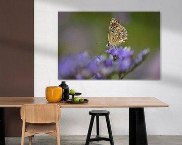 Vlinder in een zee van paars von Lizet Wesselman