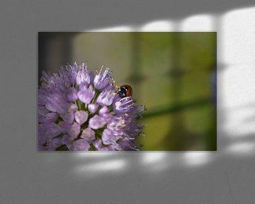 Lieveheersbeestje op een bloem von Lizet Wesselman