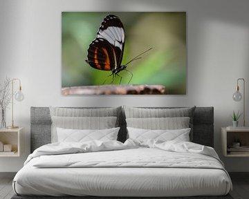 Vlinder in focus van Lizet Wesselman